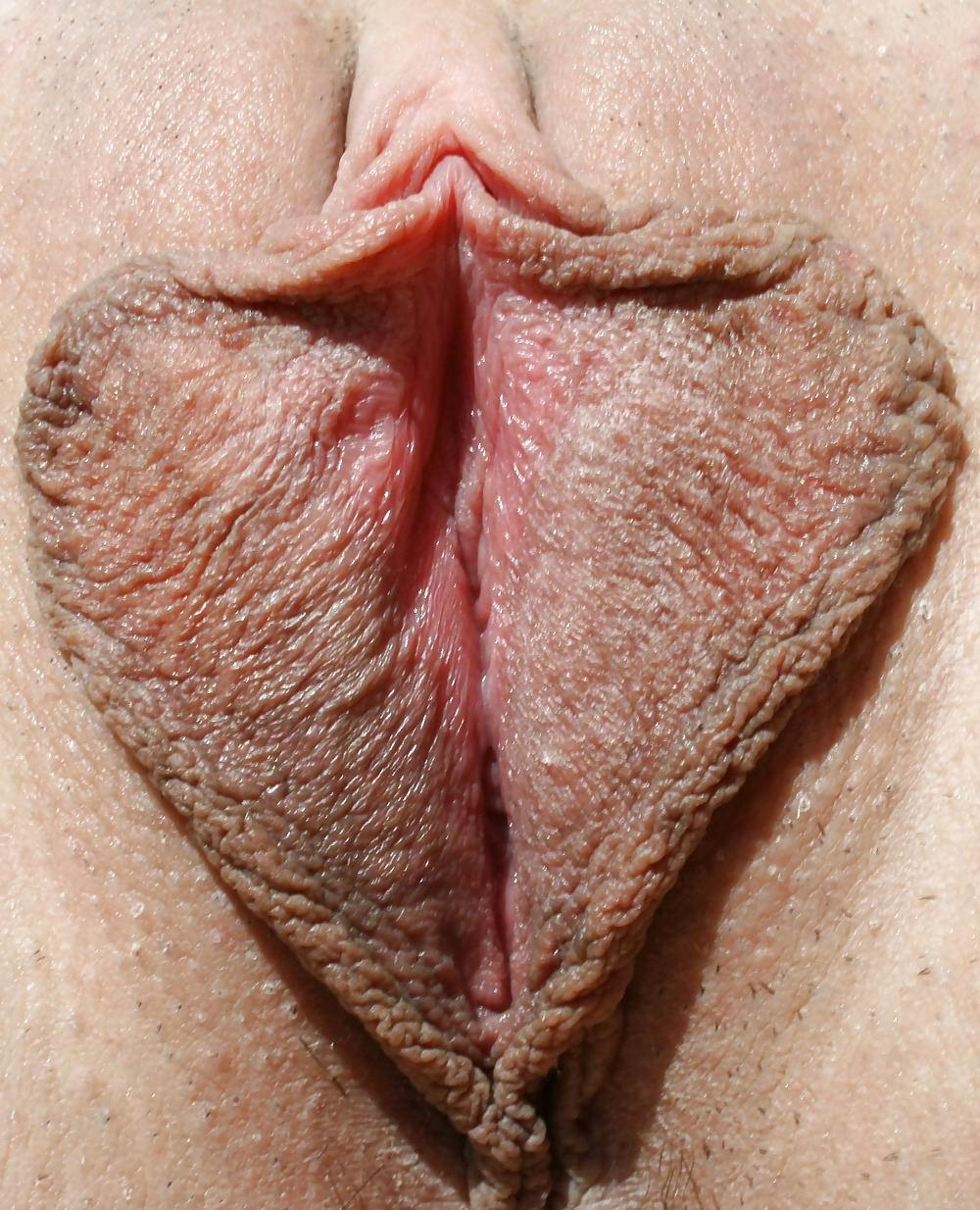 фото половые губы сиповки нашем ресурсе сможете